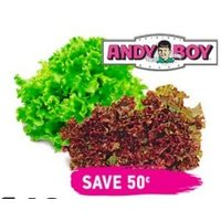 Fresh Andy Boy Red or Green Leaf Lettuce